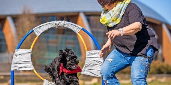 Weltrekord in Hannover? Hund springt 47-mal durch den Reifen