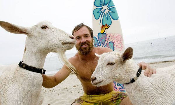 Völlig skurril: In Kalifornien arbeitet eine Ziege als Surflehrer!