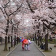 Japanse kersenbloesem bloeide nog nooit zo vroeg | 'Verijdelde couppoging' in Niger