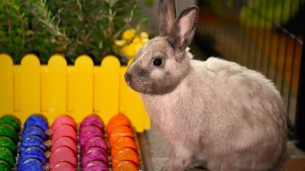 Ostern: Warum bringt der Osterhase bunte Eier?