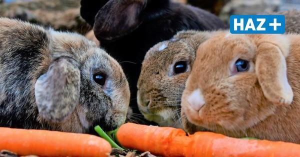 """Kurz vor Ostern: """"Hände für Pfoten"""" rettet 30 Kaninchen vor der Schlachtung"""