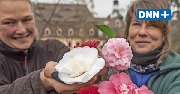 Ausflugstipp für Gartenfreunde: Das Kamelienschloss und die Grüne Schatzkammer Sachsens