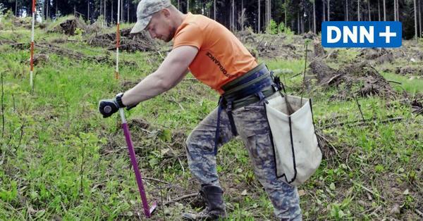 Sachsenforst pflanzt 2021 sechs Millionen Bäume