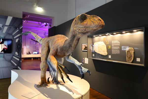 Auf den Spuren der Dinos? Das geht auch virtuell im Landesmuseum. (Foto: Rainer Dröse)