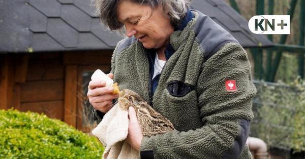 Preetzer Wildtierheim: Hier gibt es Fläschchen für die Osterhasen