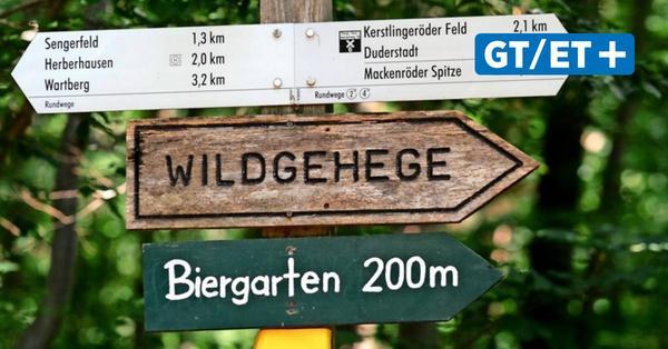 Dürre im Göttinger Wald: Erhaltung statt Holzeinschlag