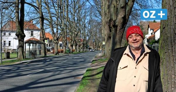 160 Jahre alte Linden: Allee-Bäume in Bad Doberan werden gekürzt