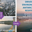 Environmental antimicrobial resistance driven by poorly managed urban wastewater