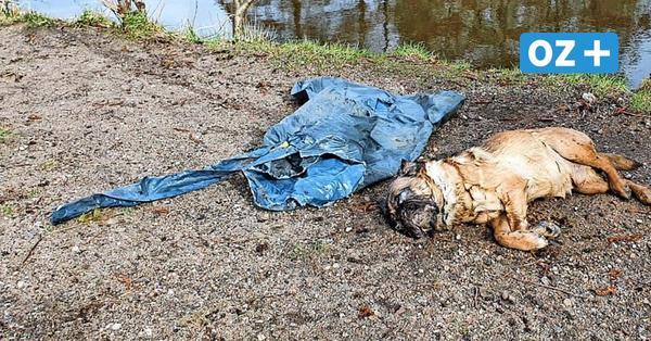 Wismar: Toter Hund im Müllsack gefunden – Obduktionsergebnis ist da