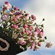 270 kinderen bezorgen een lentegroet aan ouderen