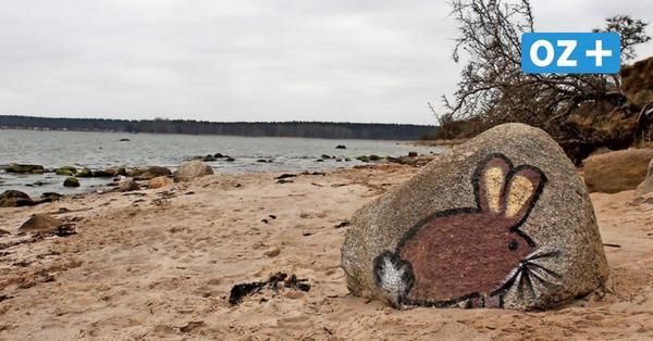 Fund am Deviner Strand bei Stralsund: Dieser Hase sorgt für Unstimmigkeit