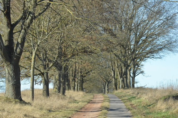 Der Postkutschenweg: Neben dem Aphaltstreifen befindet sich der Sommerweg für Kutschen und Fuhrwerke. Foto: Bernd Atzenroth