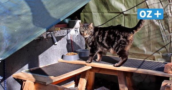 Verschärfen Katzenfutterstellen das Wildschweinproblem in Greifswald?