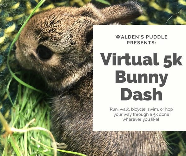 Registration is now open for Walden's Puddle first-ever Virtual 5k Bunny Dash!