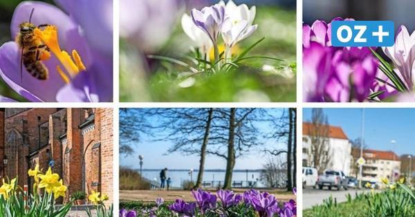 Frühlingsgrüße aus Wismar zur Osterzeit: So schön blüht die Stadt