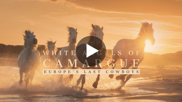 White Angels of Camargue - Europe's Last Cowboys (4K)