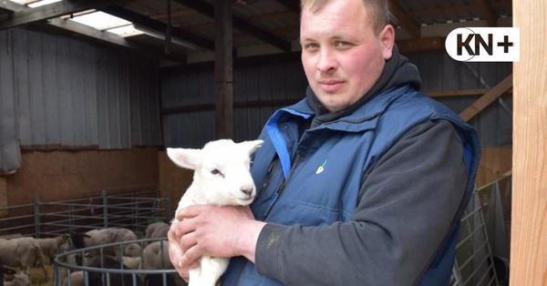 Möglicher Wolfsriss wird untersucht: Schafe von Quarnbeker Landwirt getötet