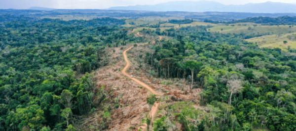 Amazon, deforestation, five-part report: Amazonia, una selva que arde