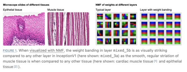 Weight banding kind of resembles muscle tissue.