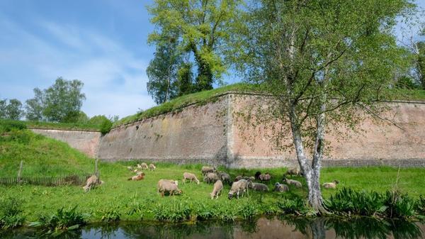 Bergues : des moutons dans les remparts - schapen aan de vestingmuren