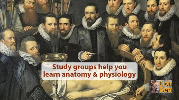 Study Groups | An Effective Way to Study Anatomy & Physiology