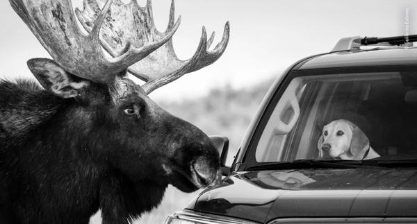 Local Photographer Earns International Wildlife Accolade