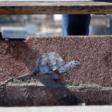 """Silent Steps """"Tortoise"""""""