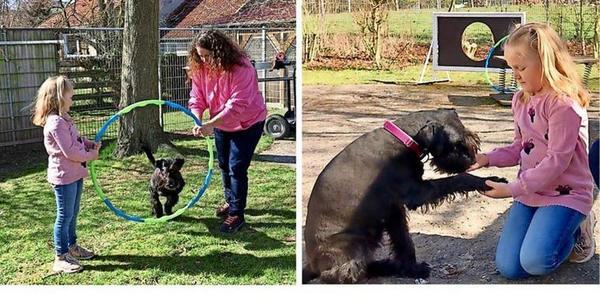 Tricktraining in Klütz und Boltenhagen: So lassen Kinder ihre Hunde durch Reifen springen