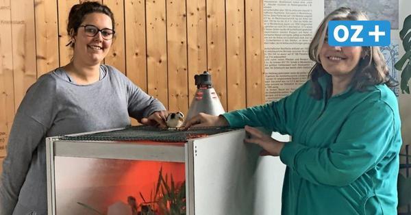 Küken, Kunst und Selbstest: Damit lockt das Kreisagrarmuseum in Dorf Mecklenburg