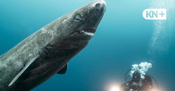 Meeresfilme - Cinemare Filmfestival in Kiel geht online