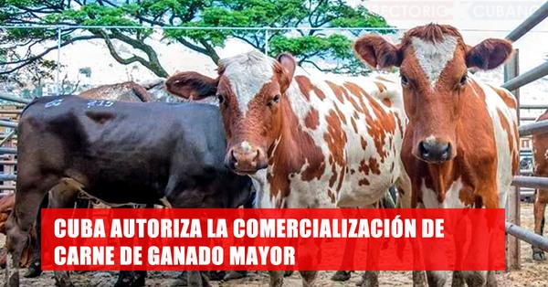 Gobierno cubano autoriza la venta de carne de res siempre que no haya decrecimiento de la masa ganadera