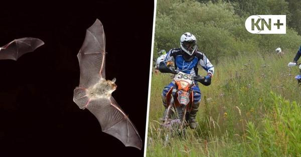 Kaltenkirchen: Vögel und Fledermäuse könnten Motocross-Gelände ausbremsen
