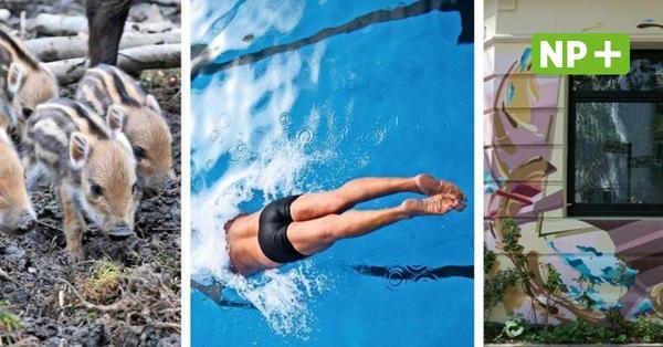 Schwimmen, Zoo, Herrenhäuser Gärten: Das bietet Hannover für die Freizeit