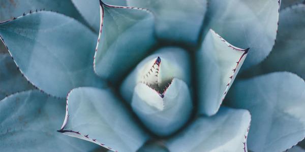 6 bijzondere bloemen en planten om aan zakenrelaties te geven