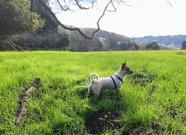 When loyal reader Rebecca left her dog Pepper with friends one weekend, he was having nothing of it. Instead, over eight hours, he found his way home — a 1 1/2-mile trek from Longfellow to Bushrod to the Oakland/Emeryville border. Want your pet to appear in The Highlighter? hltr.co/pets