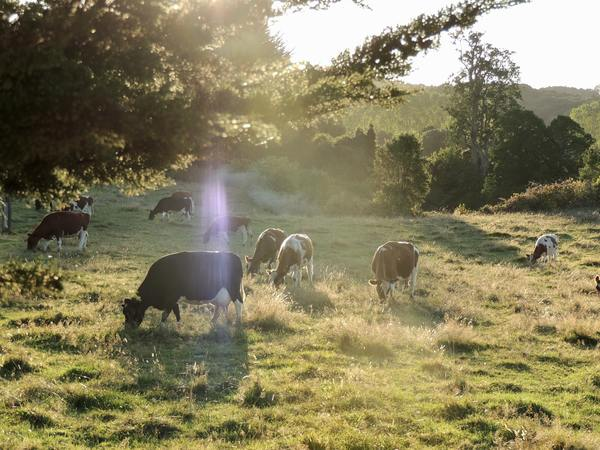 Grazing Naturally, by Dick Richardson, with Remarks by Allan Savory