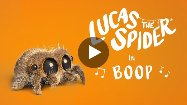I think this is for kids. I don't care. This little spider had me grinning from ear to ear.