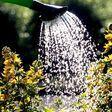 Pflanzen richtig gießen: Wie oft, wann und mit wie viel Wasser?