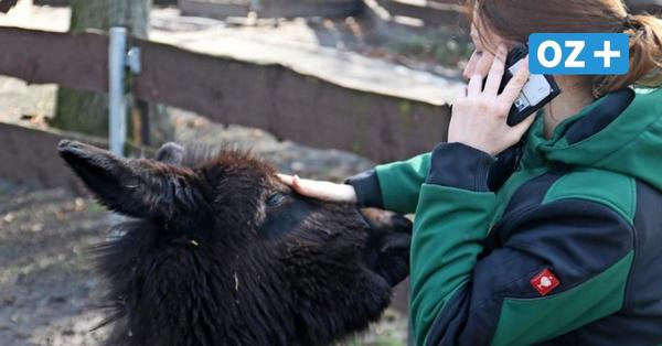 Nach Monaten der Schließung: Grimmens Zoo darf am Mittwoch öffnen