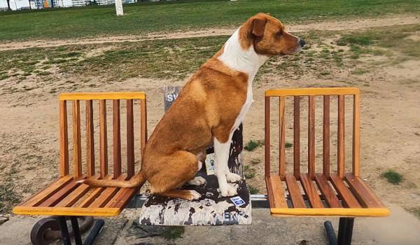 Guerilla public improvement. Dog not included.