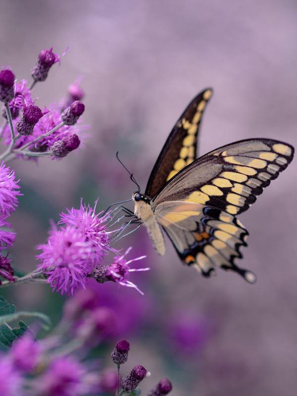 There is nothing in a caterpillar that tells you it's going to be a butterfly. -R. Buckminster Fuller