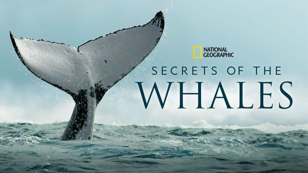 📺 Secrets of the Whales