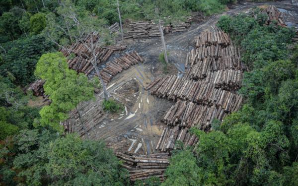 Brazil-USA, Amazon: deal with Bolsonaro would sanction Brazil's tragedy, NGOs tell Biden