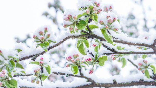 Wetterdienst: Kältester April der letzten 30 Jahre