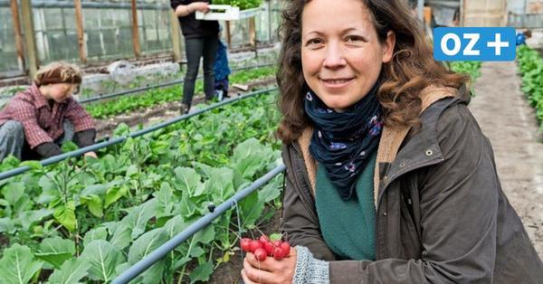 Von Solawi bis Hochbeet: 8 Wege, in Rostock ohne Garten Gemüse zu ernten