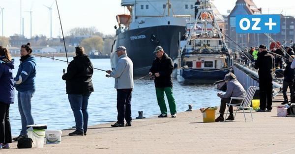 Hochsaison für Hering in MV: Darum gibt es für Hobbyangler keine Fangquoten