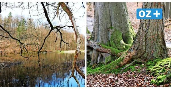 Region Bad Doberan: Das sind die vier schönsten Routen für einen Waldspaziergang