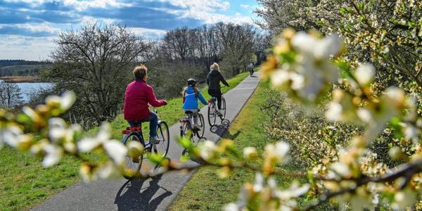 Brandenburg: Koalition schließt Verkehrswende-Kompromiss mit Volksinitiative