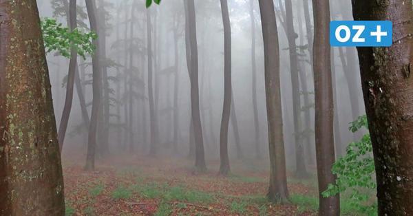 """Nationalparks in MV im Lockdown: """"Da atmet einiges auf in der Natur"""""""