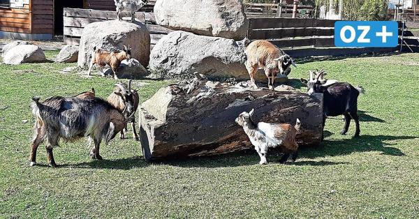 Grimmen: Das gilt im Zoo bei einer Corona-Inzidenz über 100